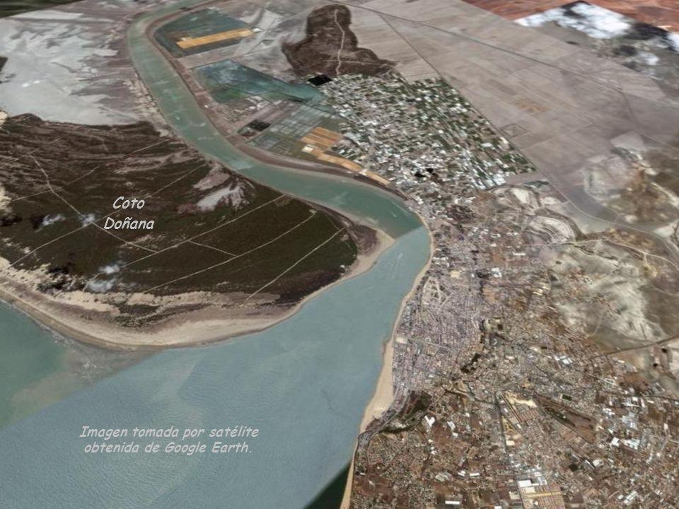 Coto Doñana Desembocadura del Río Guadalquivir
