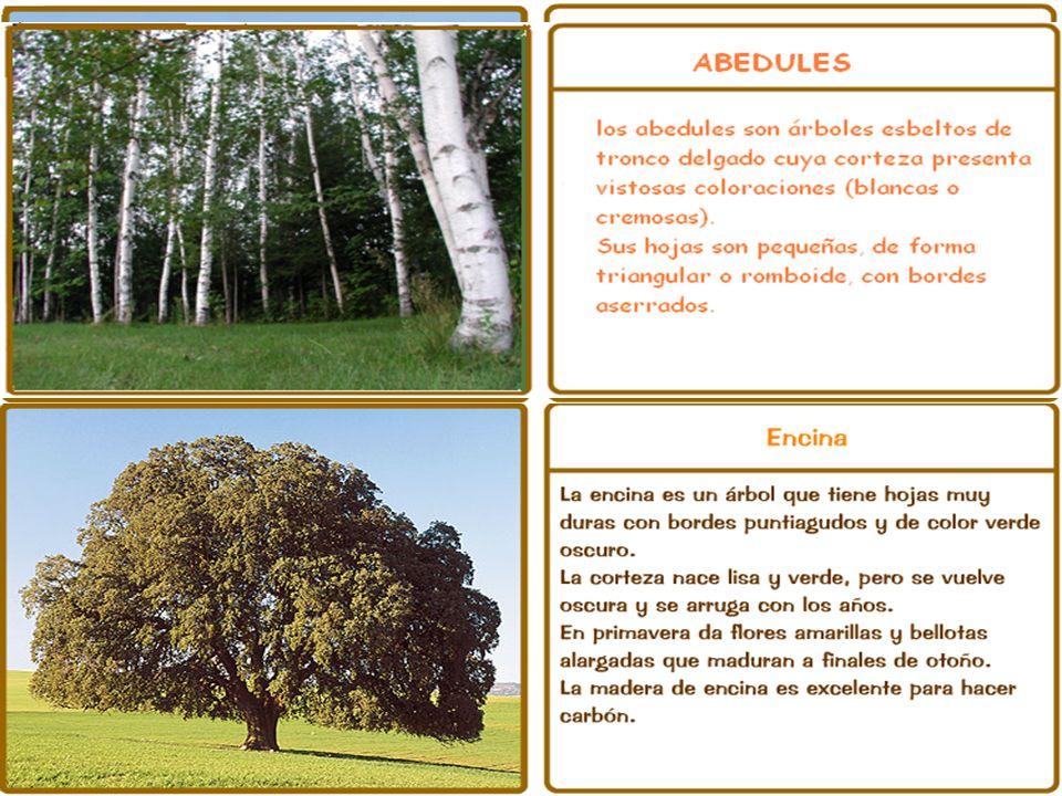 La vegetación Vegetación de las zonas bajas y de la costa. Hay abundantes prados, bosques de eucaliptos, cajigales, rebollos y encinares. Vegetación d
