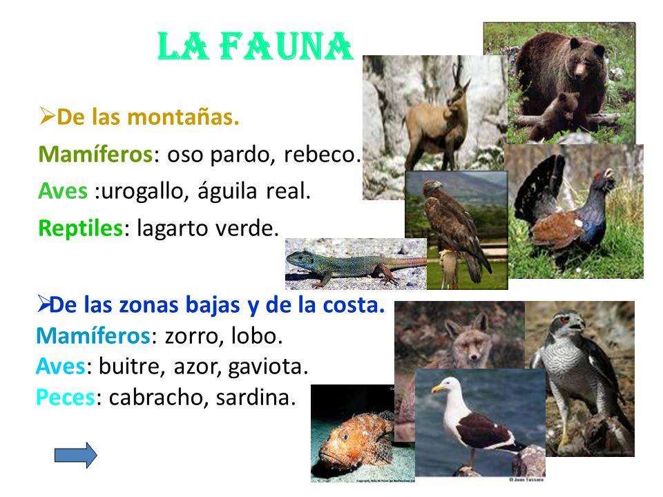 La fauna De las montañas. Mamíferos: oso pardo, rebeco. Aves :urogallo, águila real. Reptiles: lagarto verde. De las zonas bajas y de la costa. Mamífe