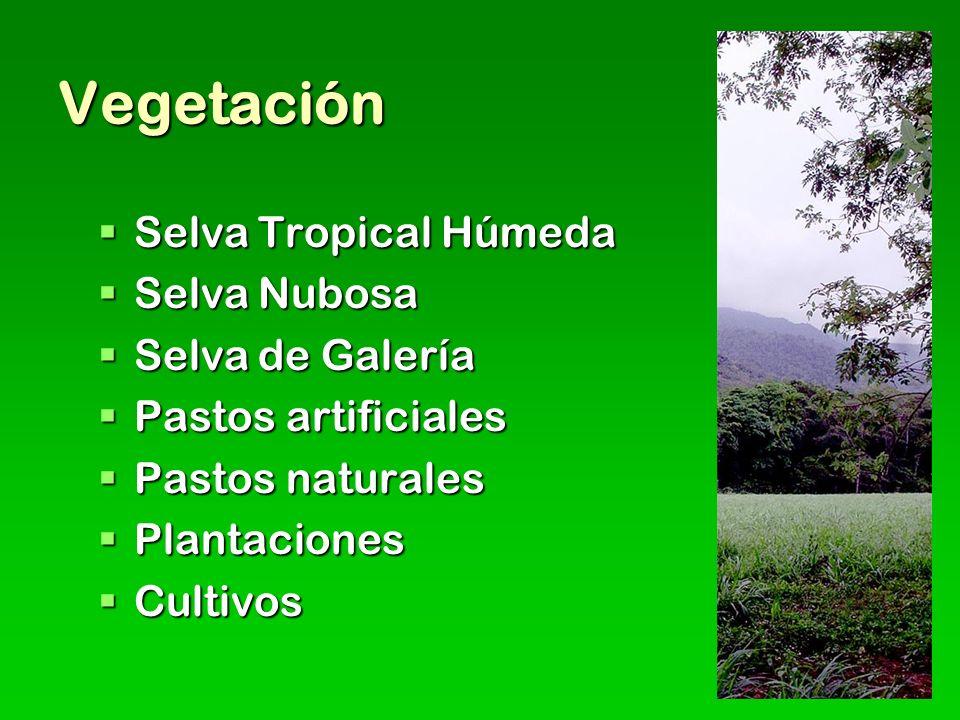 Vegetación Selva Tropical Húmeda Selva Tropical Húmeda Selva Nubosa Selva Nubosa Selva de Galería Selva de Galería Pastos artificiales Pastos artificiales Pastos naturales Pastos naturales Plantaciones Plantaciones Cultivos Cultivos