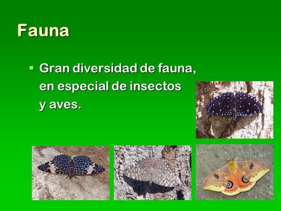 Fauna Gran diversidad de fauna, Gran diversidad de fauna, en especial de insectos y aves.