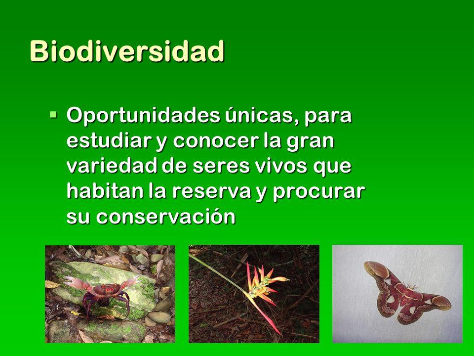 Biodiversidad Oportunidades únicas, para estudiar y conocer la gran variedad de seres vivos que habitan la reserva y procurar su conservación Oportunidades únicas, para estudiar y conocer la gran variedad de seres vivos que habitan la reserva y procurar su conservación