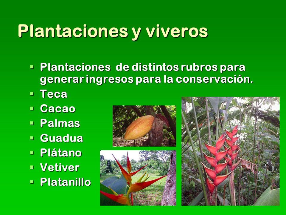 Plantaciones y viveros Plantaciones de distintos rubros para generar ingresos para la conservación.