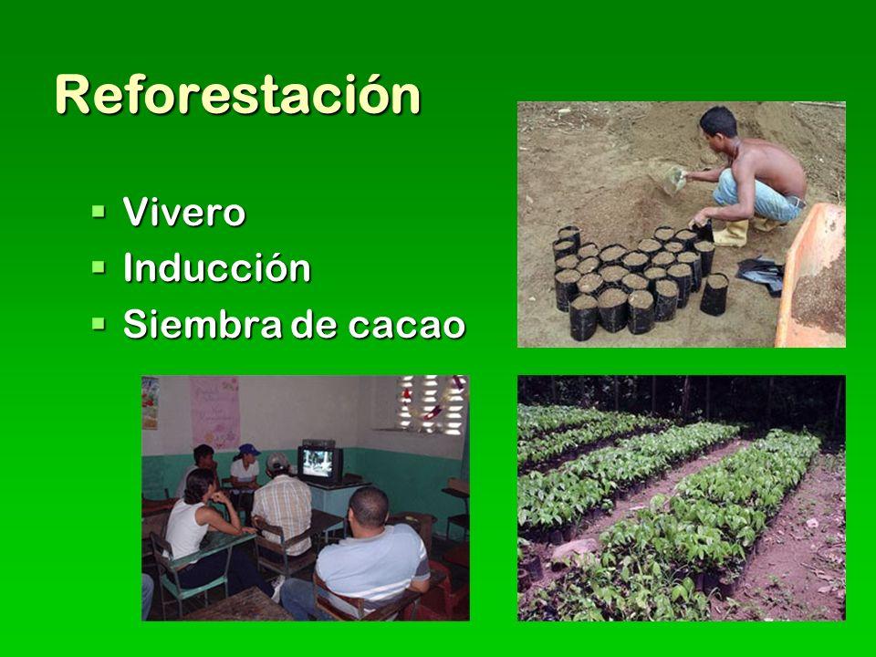 Reforestación Vivero Vivero Inducción Inducción Siembra de cacao Siembra de cacao