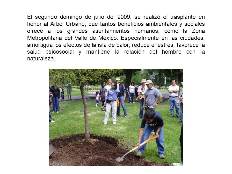 El segundo domingo de julio del 2009, se realizó el trasplante en honor al Árbol Urbano, que tantos beneficios ambientales y sociales ofrece a los grandes asentamientos humanos, como la Zona Metropolitana del Valle de México.