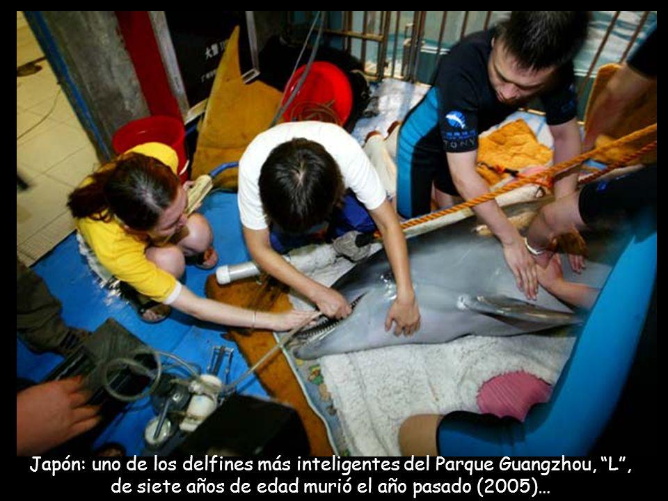 El unicel es mortal para la vida marina… Japón: uno de los delfines más inteligentes del Parque Guangzhou, L, de siete años de edad murió el año pasado (2005)…