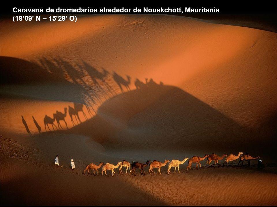 Caravana de dromedarios alrededor de Nouakchott, Mauritania (1809 N – 1529 O)