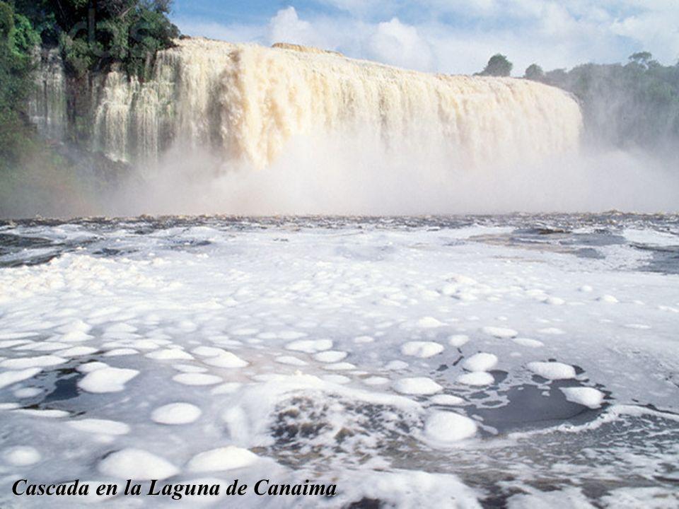 Puente Angostura sobre el Río Orinoco Río Orinoco (al fondo el Tepuy Autana) Laguna de Canaima