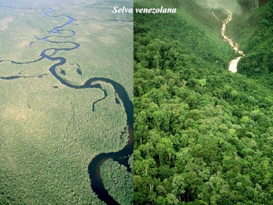 Confluencia de dos ríos en la selva del Estado Bolívar