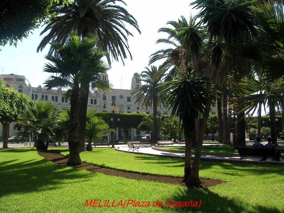 ALBACETE(Plaza)