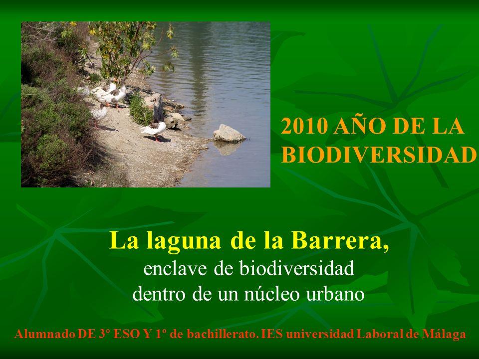 2010 AÑO DE LA BIODIVERSIDAD La laguna de la Barrera, enclave de biodiversidad dentro de un núcleo urbano Alumnado DE 3º ESO Y 1º de bachillerato. IES