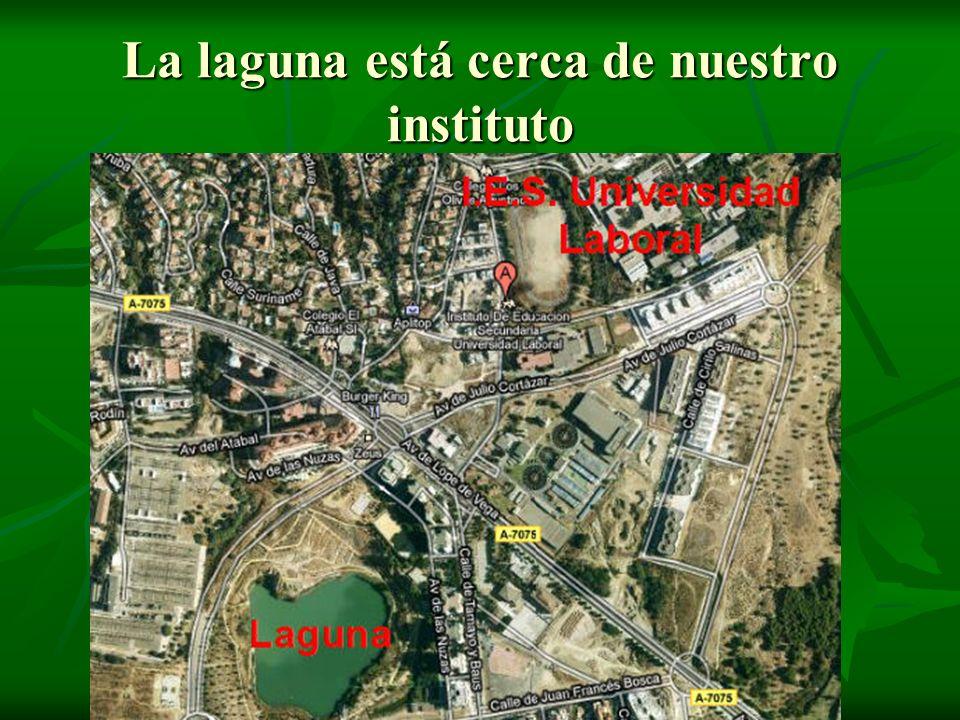 La laguna está cerca de nuestro instituto