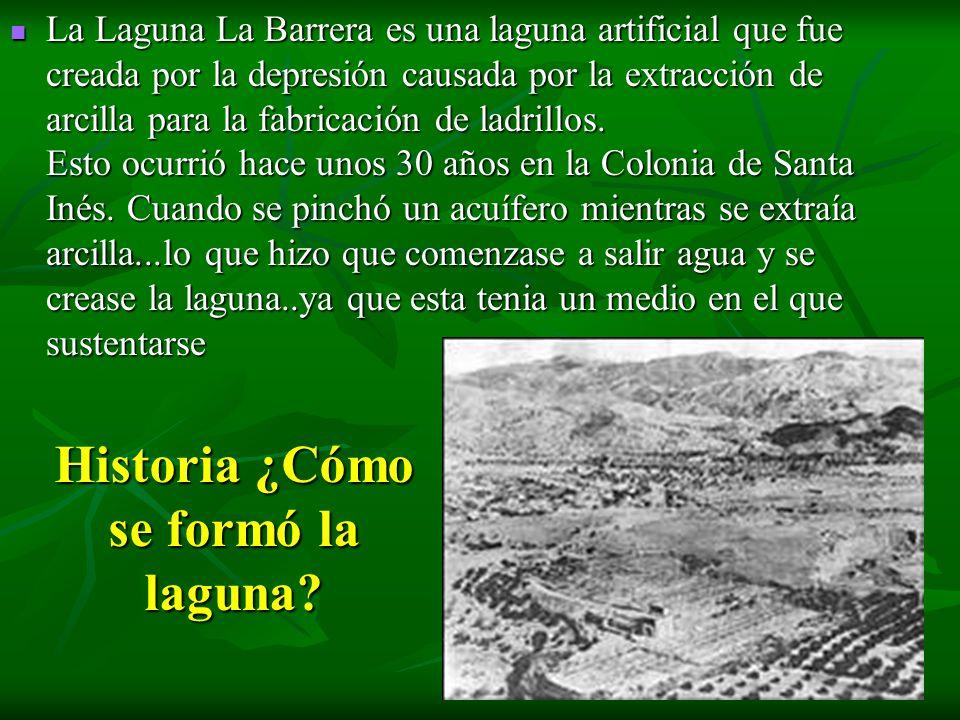 Historia ¿Cómo se formó la laguna? La Laguna La Barrera es una laguna artificial que fue creada por la depresión causada por la extracción de arcilla