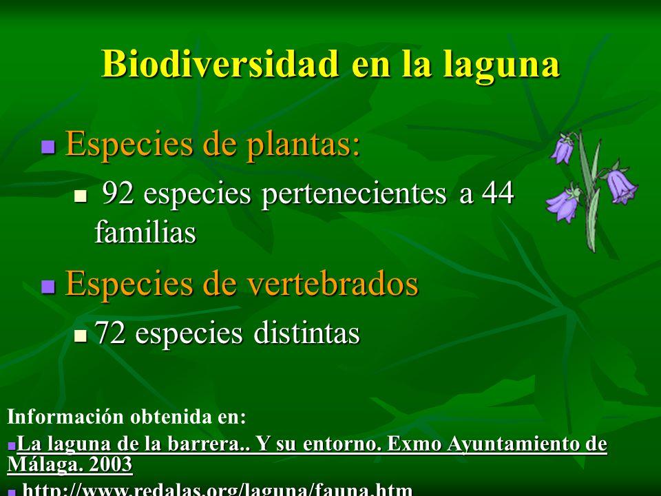 Biodiversidad en la laguna Especies de plantas: Especies de plantas: 92 especies pertenecientes a 44 familias 92 especies pertenecientes a 44 familias