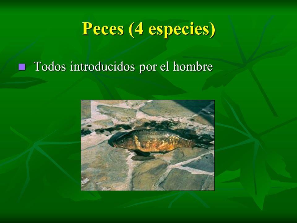 Peces (4 especies) Todos introducidos por el hombre Todos introducidos por el hombre