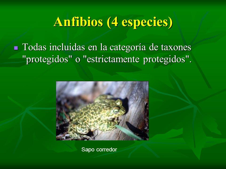 Anfibios (4 especies) Todas incluidas en la categoría de taxones