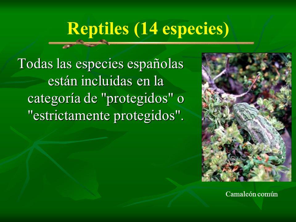 Reptiles (14 especies) Todas las especies españolas están incluidas en la categoría de