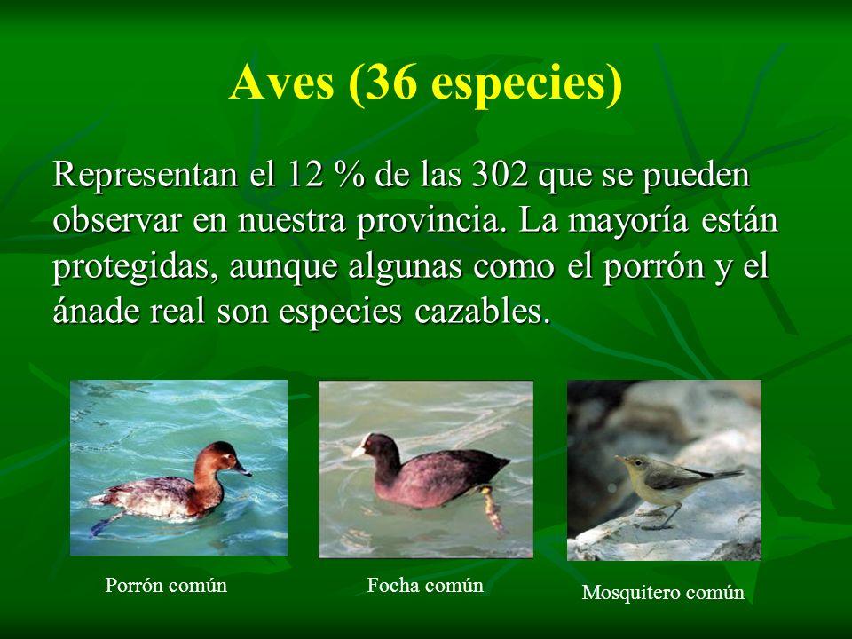 Aves (36 especies) Representan el 12 % de las 302 que se pueden observar en nuestra provincia. La mayoría están protegidas, aunque algunas como el por