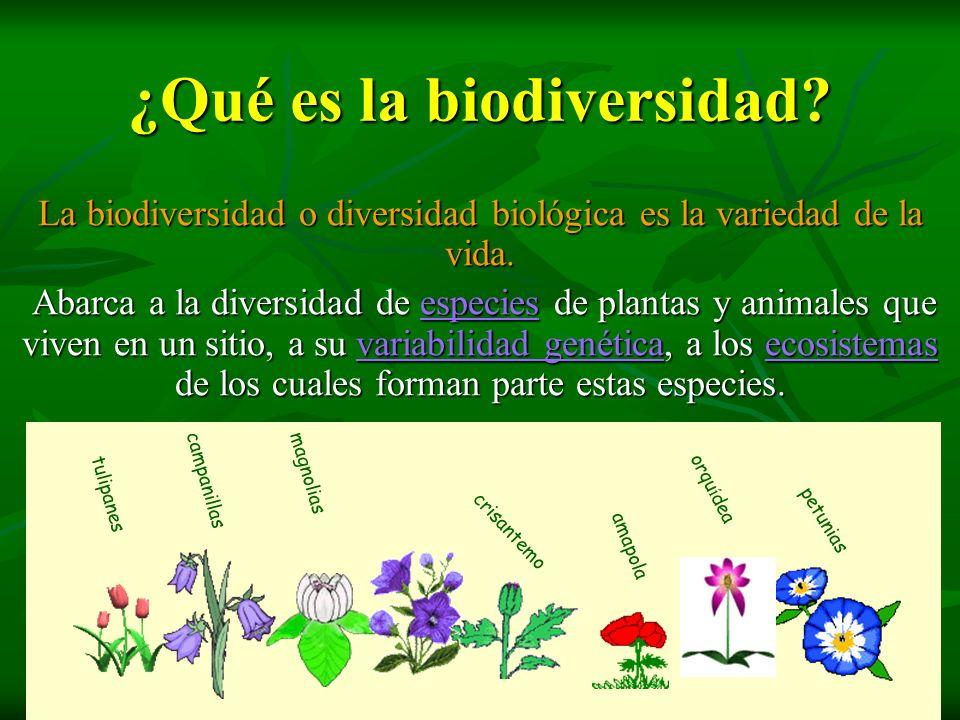 ¿Qué es la biodiversidad? ¿Qué es la biodiversidad? La biodiversidad o diversidad biológica es la variedad de la vida. Abarca a la diversidad de espec