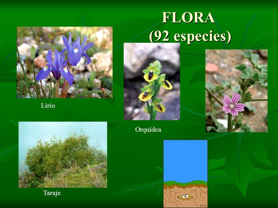 FLORA (92 especies) Lirio Orquídea Taraje Malva