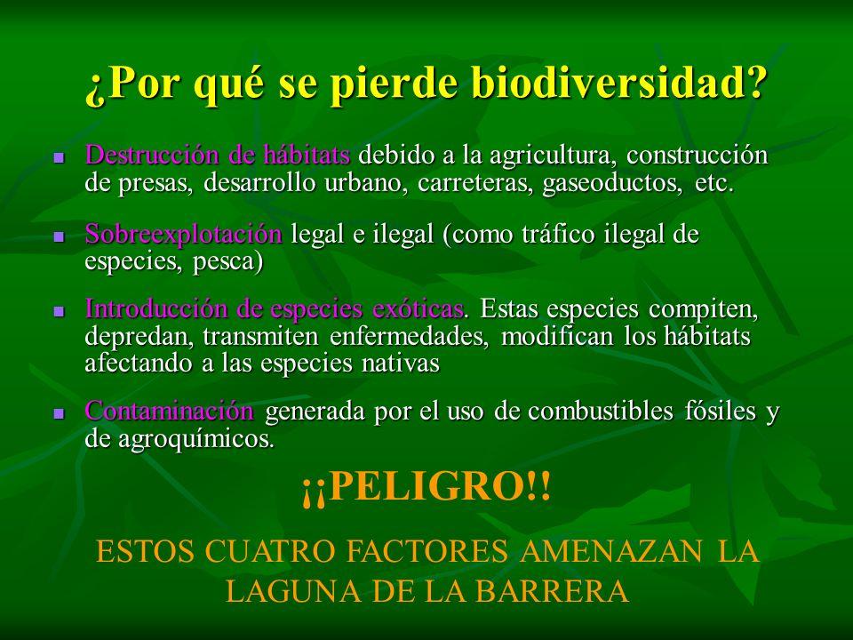 ¿Por qué se pierde biodiversidad? Destrucción de hábitats debido a la agricultura, construcción de presas, desarrollo urbano, carreteras, gaseoductos,