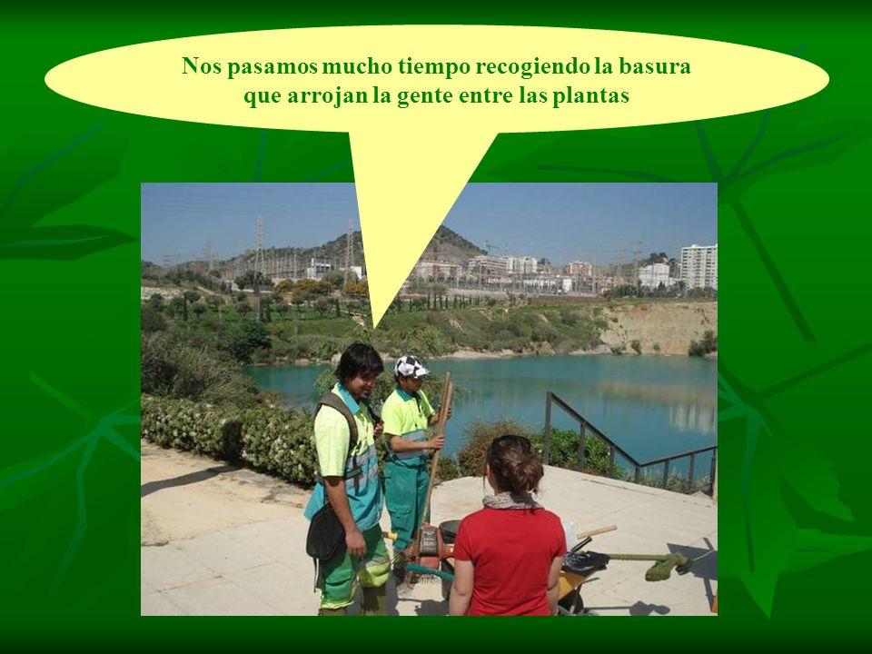 Nos pasamos mucho tiempo recogiendo la basura que arrojan la gente entre las plantas