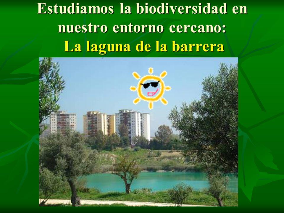 Estudiamos la biodiversidad en nuestro entorno cercano: La laguna de la barrera