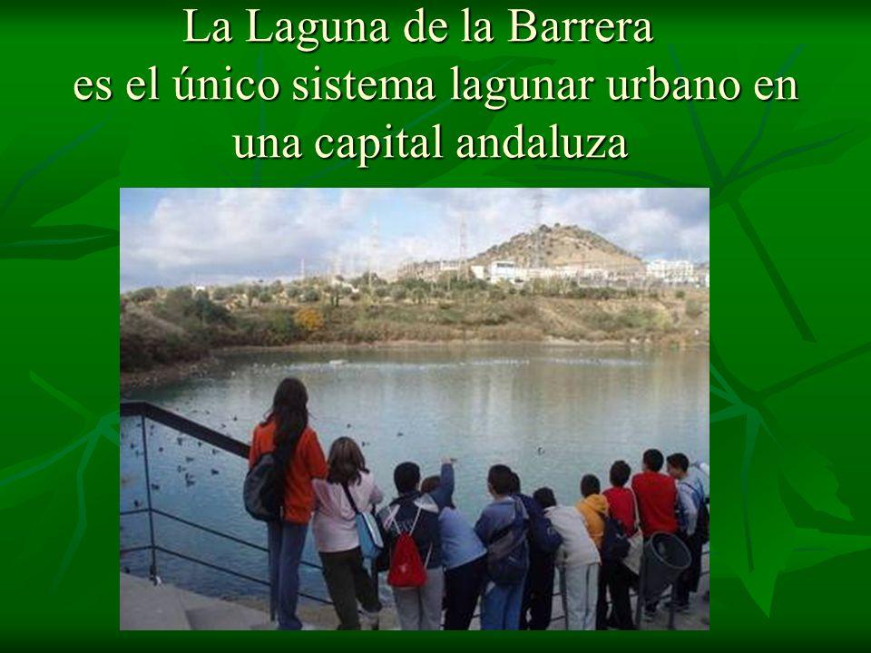 La Laguna de la Barrera es el único sistema lagunar urbano en una capital andaluza La Laguna de la Barrera es el único sistema lagunar urbano en una c