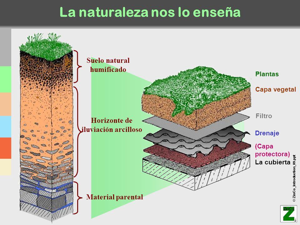 © ZinCo_Introduction_09.ppt La naturaleza nos lo enseña Capa vegetal Drenaje Filtro (Capa protectora) La cubierta Plantas Horizonte de iluviación arci