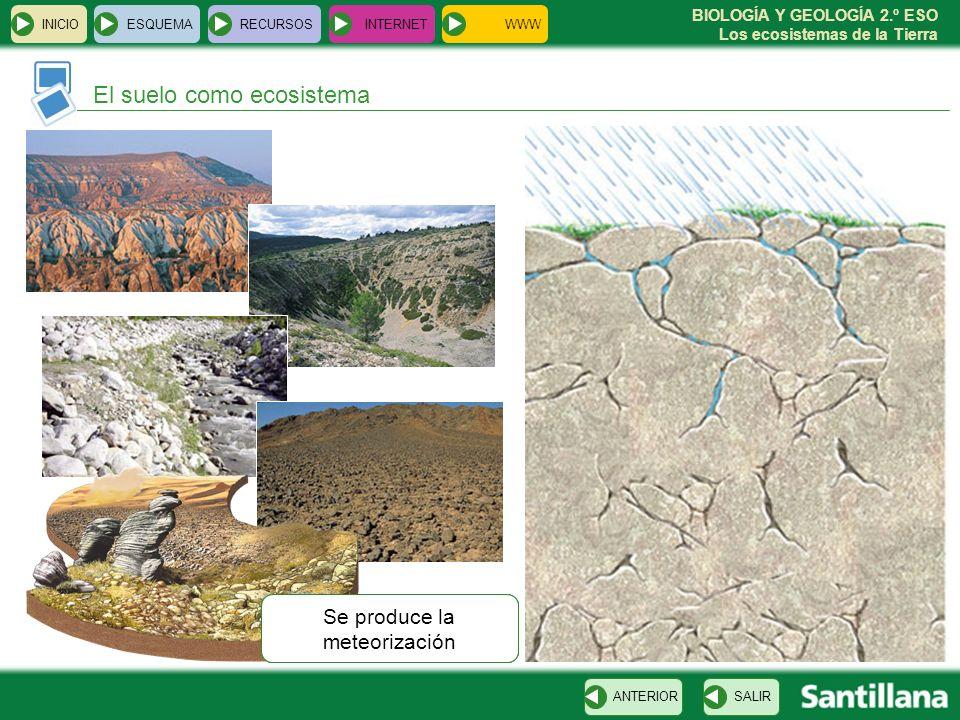 BIOLOGÍA Y GEOLOGÍA 2.º ESO Los ecosistemas de la Tierra VOLVER INICIOESQUEMARECURSOSINTERNET El suelo como ecosistema SALIRANTERIOR Suelo desarrollad