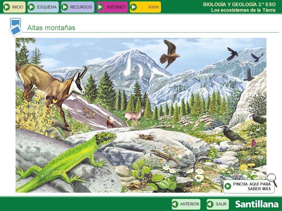 BIOLOGÍA Y GEOLOGÍA 2.º ESO Los ecosistemas de la Tierra INICIOESQUEMARECURSOSINTERNET Altas montañas SALIRANTERIOR PINCHA AQUÍ PARA SABER MÁS WWW