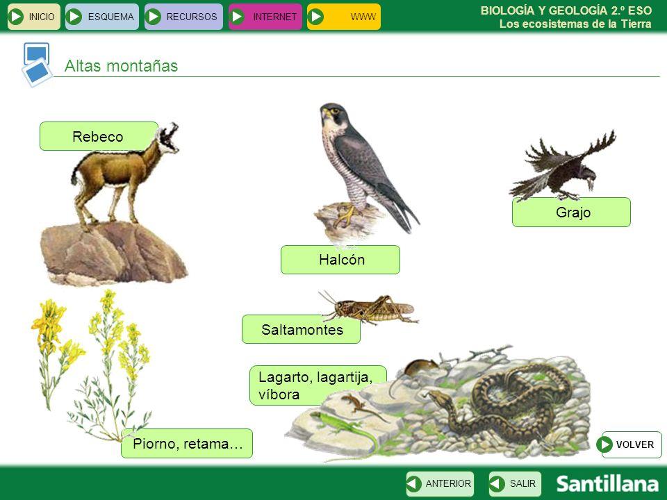 BIOLOGÍA Y GEOLOGÍA 2.º ESO Los ecosistemas de la Tierra Piorno, retama… Lagarto, lagartija, víbora Saltamontes Grajo Halcón Rebeco INICIOESQUEMARECUR