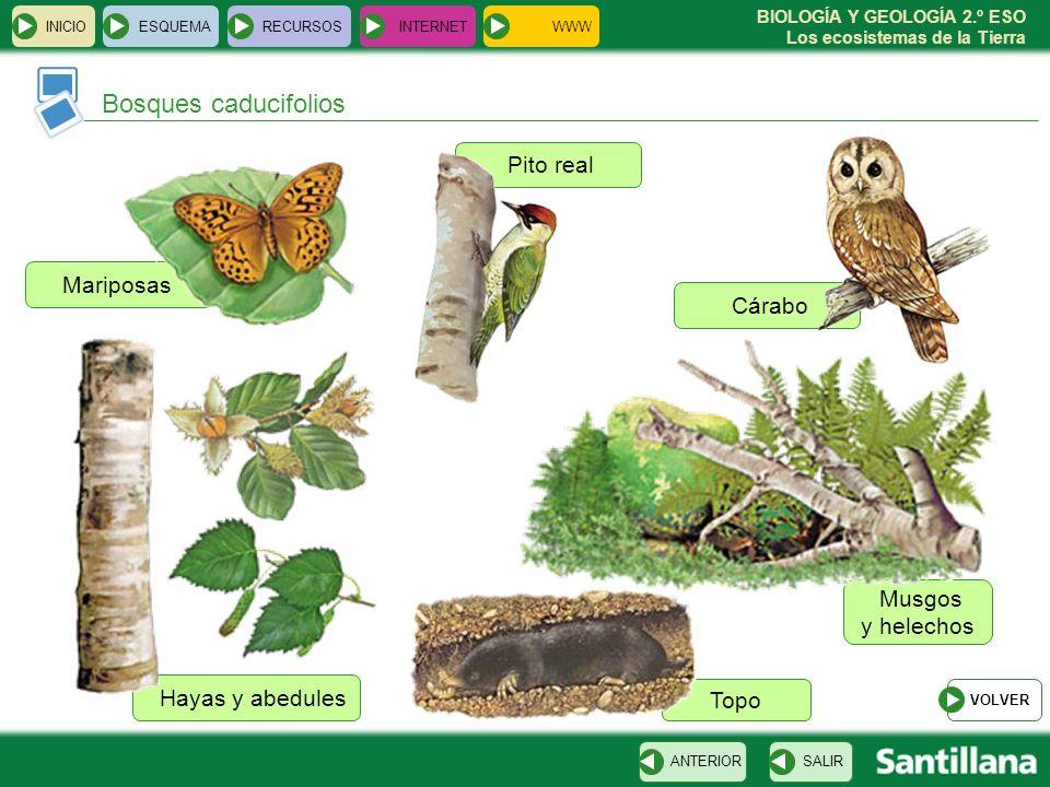 BIOLOGÍA Y GEOLOGÍA 2.º ESO Los ecosistemas de la Tierra Mariposas Musgos y helechos Pito real Hayas y abedules Topo Cárabo INICIOESQUEMARECURSOSINTER