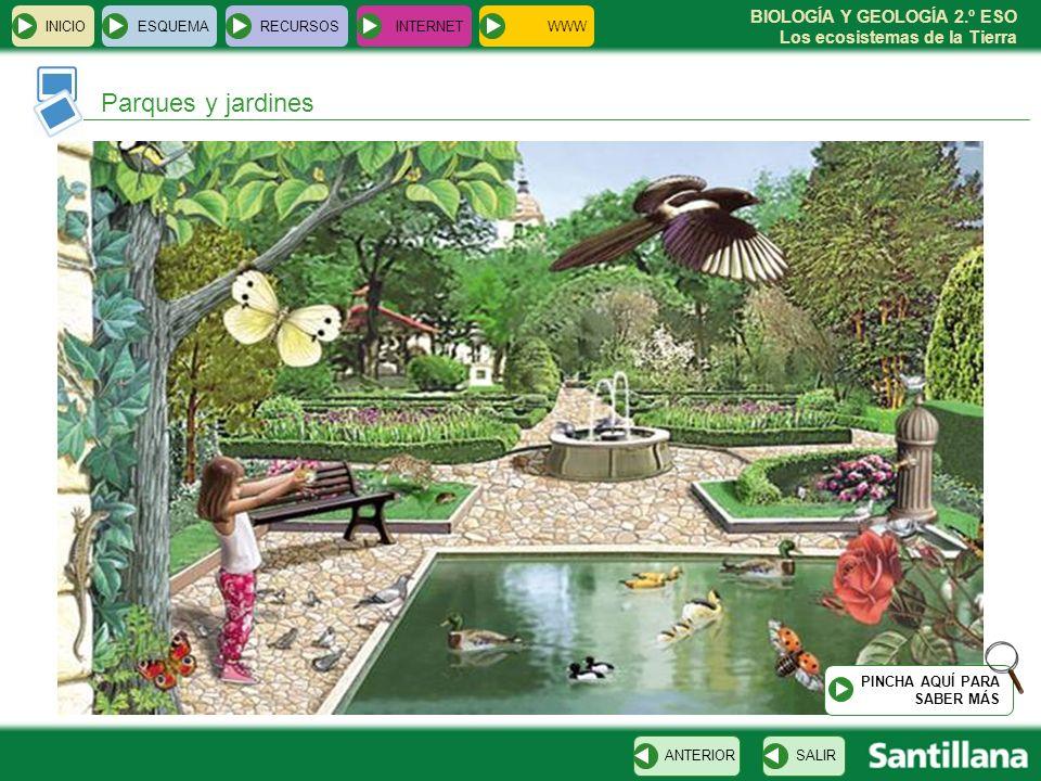 BIOLOGÍA Y GEOLOGÍA 2.º ESO Los ecosistemas de la Tierra INICIOESQUEMARECURSOSINTERNET SALIRANTERIOR Parques y jardines PINCHA AQUÍ PARA SABER MÁS WWW