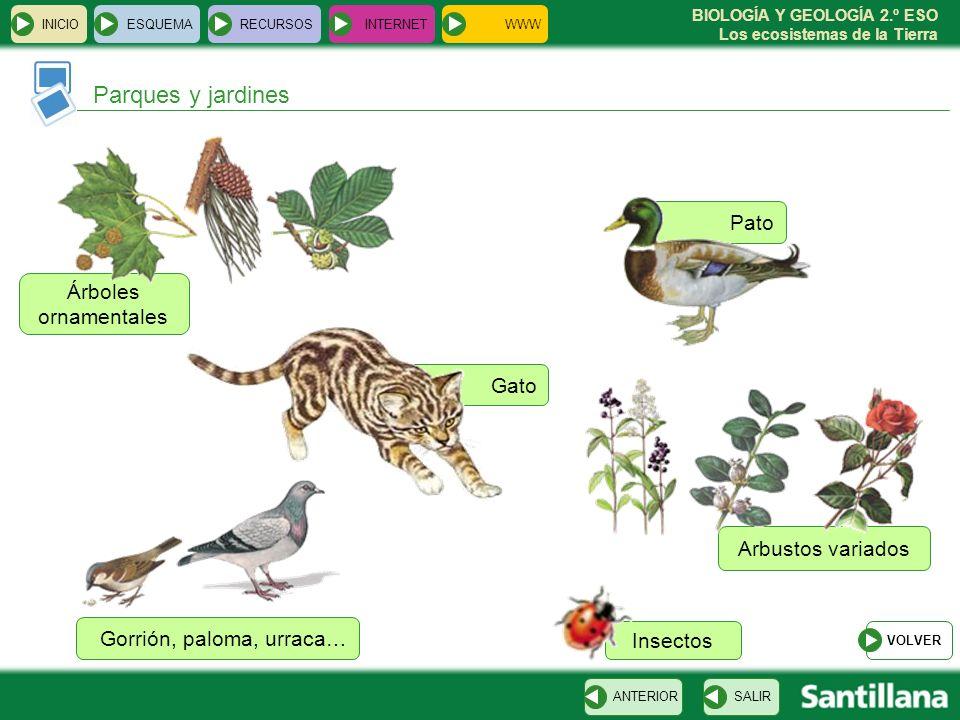 BIOLOGÍA Y GEOLOGÍA 2.º ESO Los ecosistemas de la Tierra Arbustos variados INICIOESQUEMARECURSOSINTERNET SALIRANTERIOR Parques y jardines Árboles orna