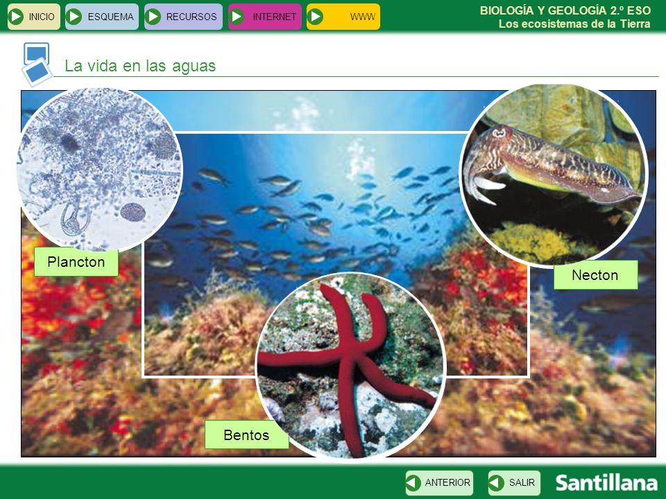 BIOLOGÍA Y GEOLOGÍA 2.º ESO Los ecosistemas de la Tierra La vida en las aguas INICIOESQUEMARECURSOSINTERNET SALIRANTERIOR Plancton Necton Bentos WWW