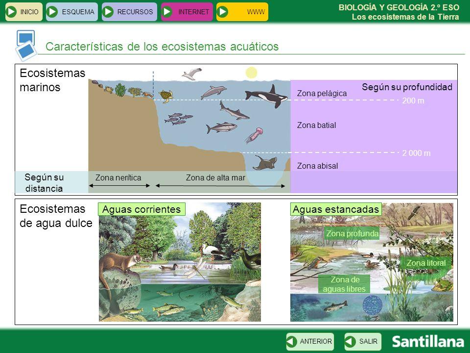 BIOLOGÍA Y GEOLOGÍA 2.º ESO Los ecosistemas de la Tierra INICIOESQUEMARECURSOSINTERNET Características de los ecosistemas acuáticos SALIRANTERIOR Ecos