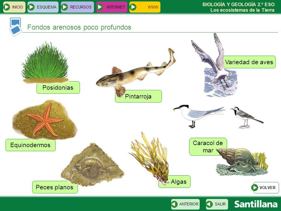 BIOLOGÍA Y GEOLOGÍA 2.º ESO Los ecosistemas de la Tierra Posidonias Peces planos Caracol de mar Equinodermos Algas Variedad de aves Pintarroja INICIOE