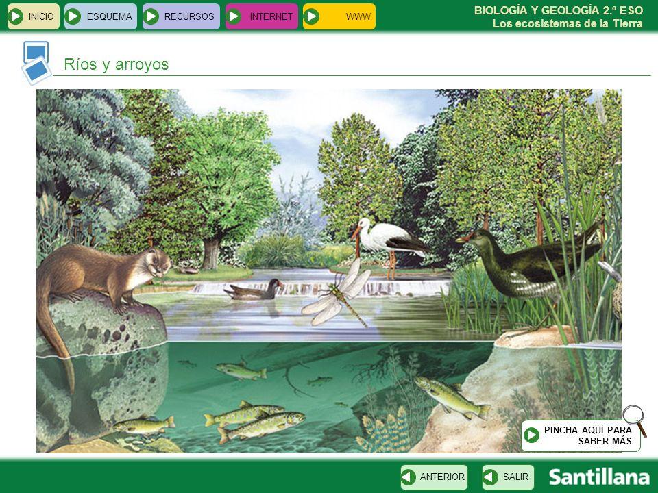 BIOLOGÍA Y GEOLOGÍA 2.º ESO Los ecosistemas de la Tierra INICIOESQUEMARECURSOSINTERNET Ríos y arroyos SALIRANTERIOR PINCHA AQUÍ PARA SABER MÁS WWW