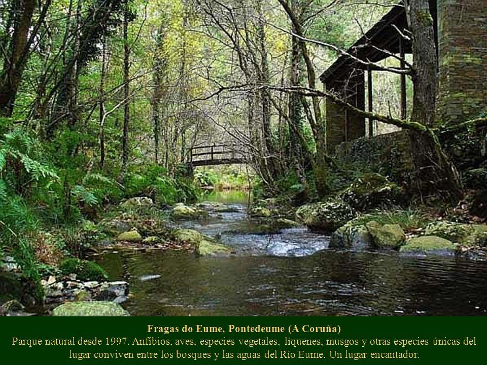 Fragas do Eume, Pontedeume (A Coruña) Parque natural desde 1997. Anfibios, aves, especies vegetales, líquenes, musgos y otras especies únicas del luga