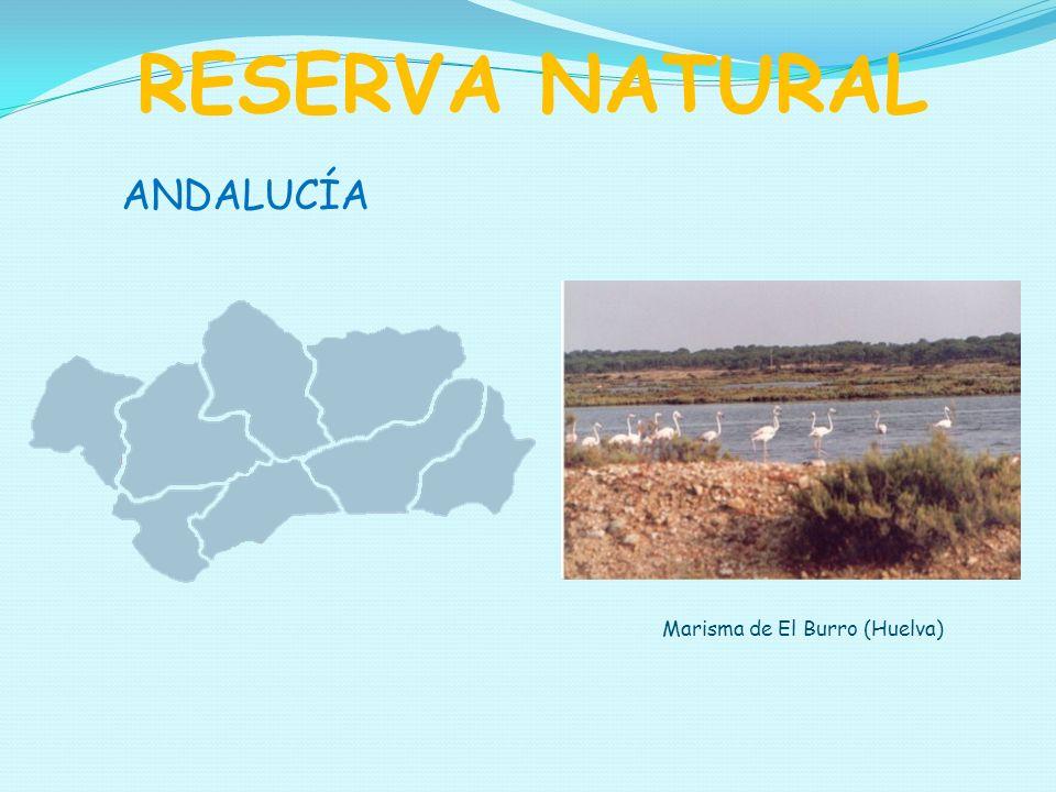 ANDALUCÍA RESERVA NATURAL Marisma de El Burro (Huelva)