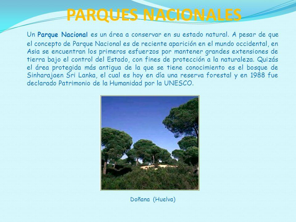 PARQUES NACIONALES Un Parque Nacional es un área a conservar en su estado natural. A pesar de que el concepto de Parque Nacional es de reciente aparic