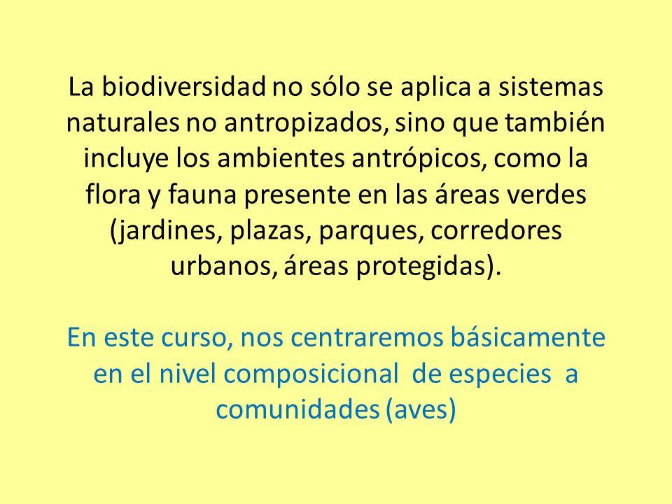 Otros grupos de fauna en áreas verdes Insectos y otros invertebrados (arañas, caracoles, chanchitos de tierra, lombrices): (polinizadores, presa para aves, aumentan la biodiversidad, participan de procesos ecosistémicos)
