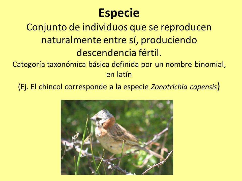 Categorías taxonómicas (Ej.