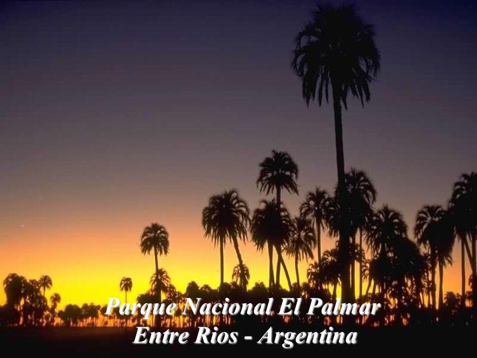 Paisaje pampeano y sus caballos La Pampa - Argentina