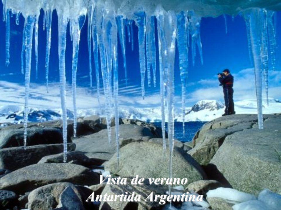 Pingüinos Antartida Argentina
