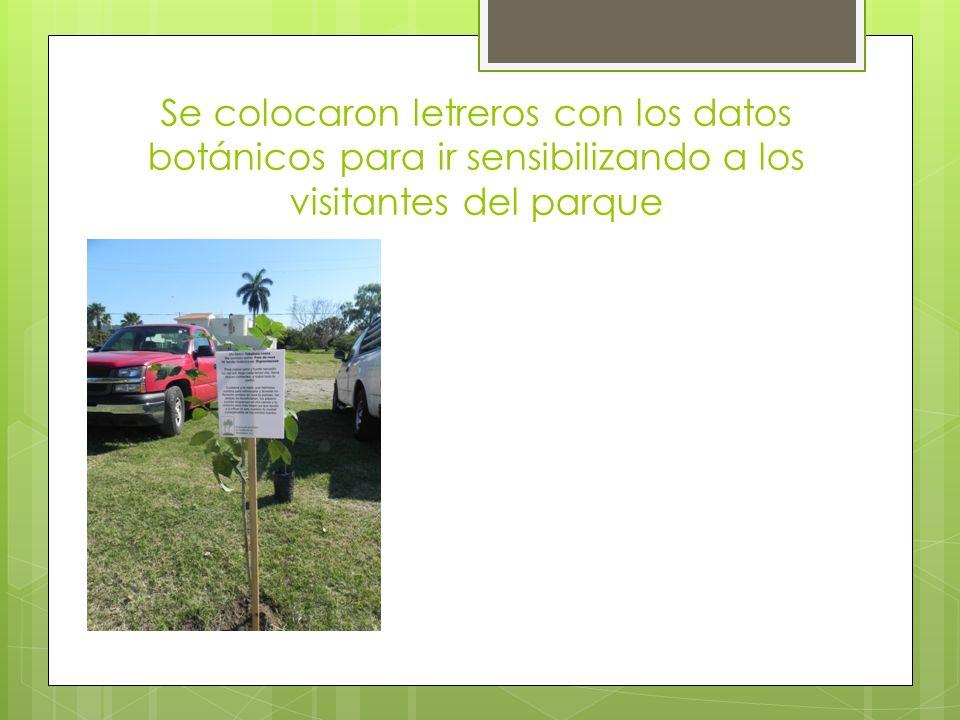 Se colocaron letreros con los datos botánicos para ir sensibilizando a los visitantes del parque
