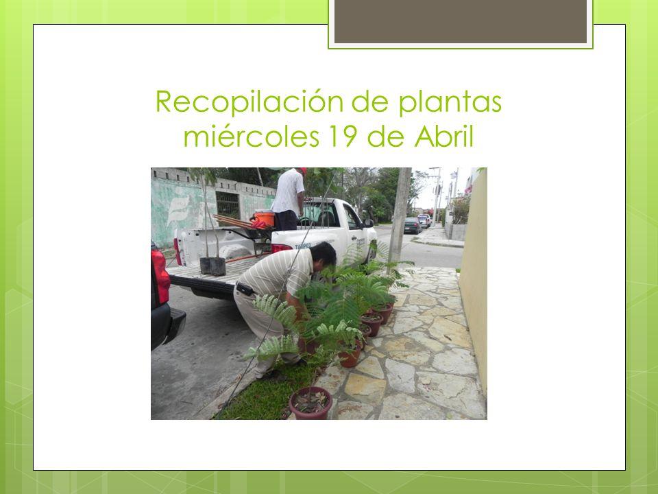 Recopilación de plantas miércoles 19 de Abril