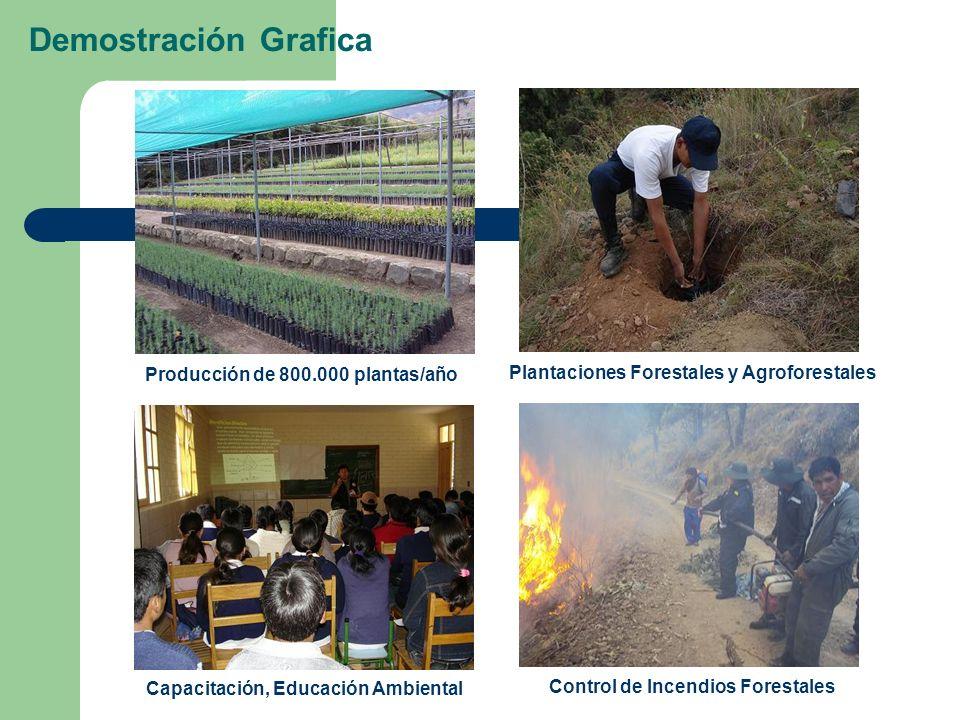 Demostración Grafica Producción de 800.000 plantas/año Plantaciones Forestales y Agroforestales Capacitación, Educación Ambiental Control de Incendios