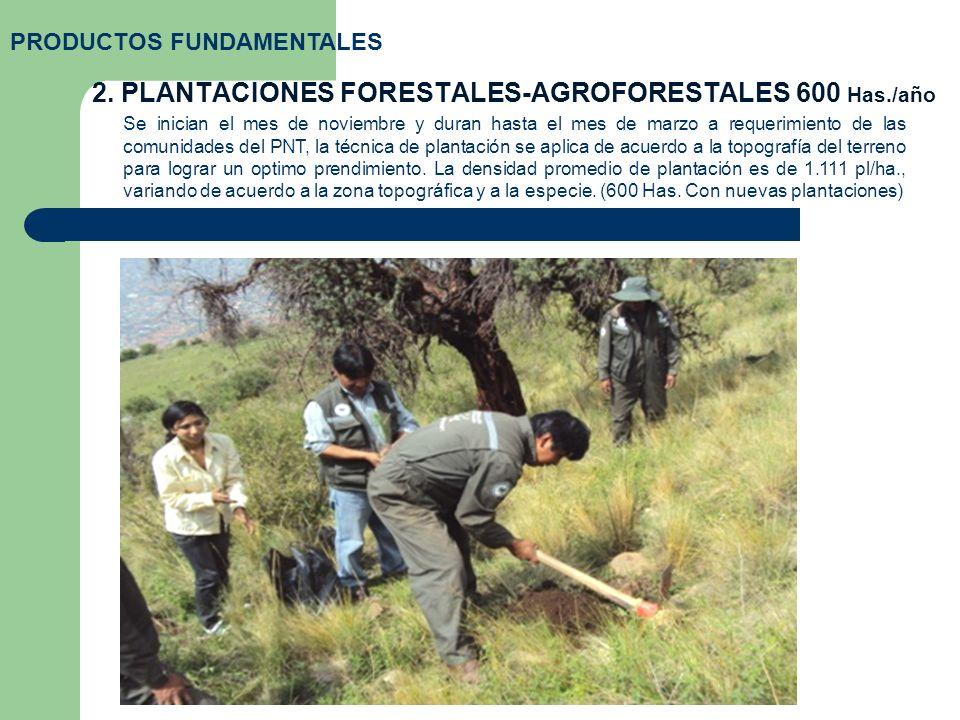 2. PLANTACIONES FORESTALES-AGROFORESTALES 600 Has./año PRODUCTOS FUNDAMENTALES Se inician el mes de noviembre y duran hasta el mes de marzo a requerim